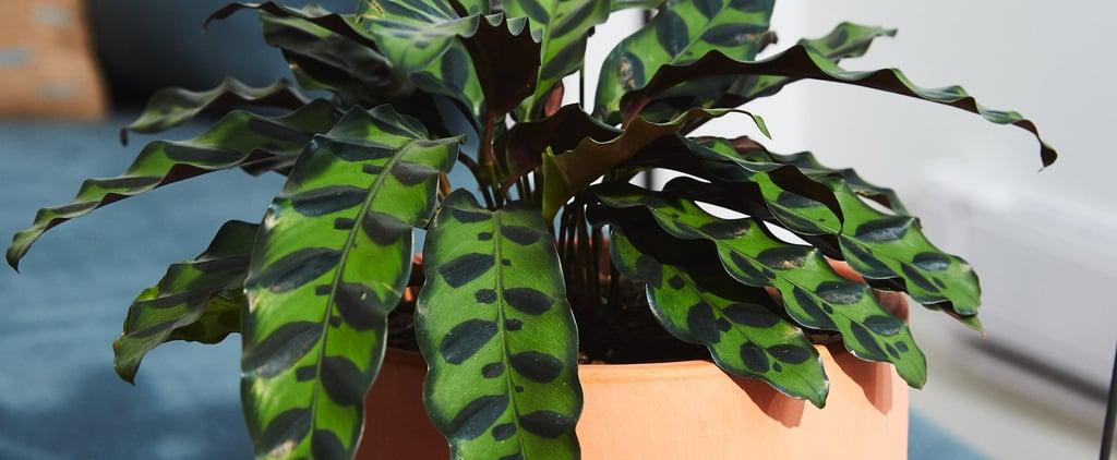 Best Cat-Friendly Plants