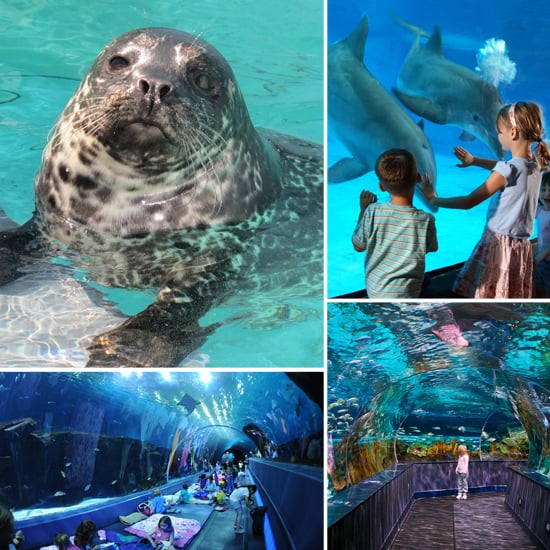 The Top 10 Family-Friendly Aquariums in the Country