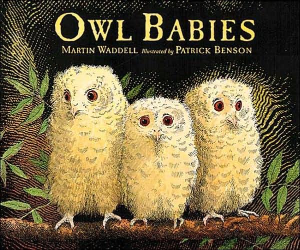 Age 3: Owl Babies