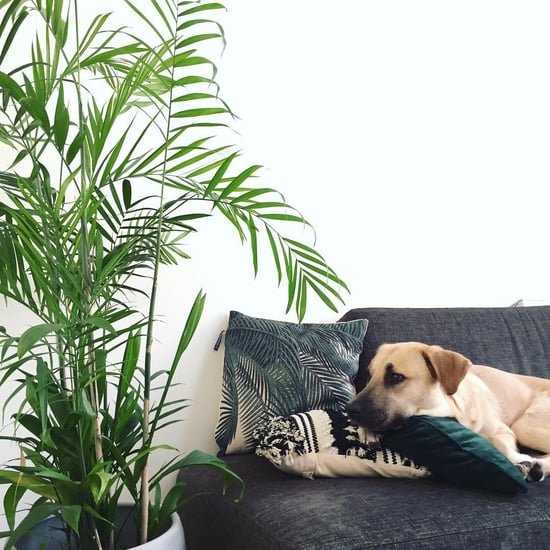 Best Dog-Friendly Houseplants