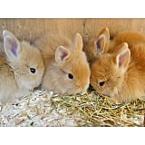 A Group of Bunnies Is Called a Fluffle