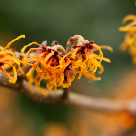 What Does Witch Hazel Do For Skin?