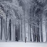 Hike a Beautiful Snowy Trail