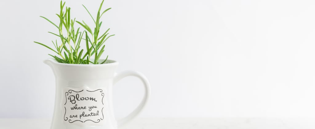 Plants That Reduce Stress