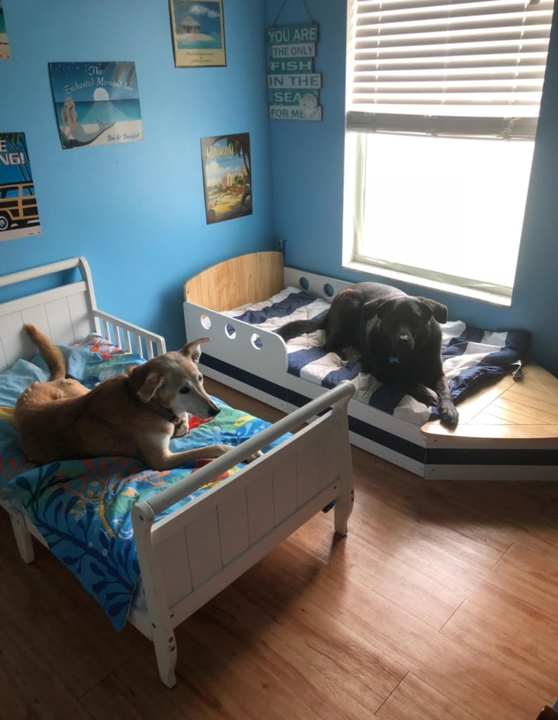 "Dani Viverito, a 44-year-old woman who lives in Florida, has always been passionate about animal rescue, especially where dogs are concerned. And while we're all for finding animals good homes, Dani recently went above and beyond for her pups by giving them toddler beds to sleep in — and fortunately, she has the photos to prove it. ""We're super passionate about animal rescue and advocacy because we as people need to be the voice for the voiceless,"" Dani told POPSUGAR. ""People need to know that these babies in shelters are not broken. They're just waiting for a chance to learn what love is, to love, and be loved. They need patience and understanding. They're so grateful to be saved and loved and they want to love you unconditionally in return.""      Related:                                                                                                           New Dad Transformed Stairwell Nook Into a Private Room For His Dog Because Priorities               And there's no denying that her seven dogs — Princess Annabelle, Sasha, Jaxson, Muppet, Tyler, Tucker, and Harlin — get five-star treatment from their owners.  ""We didn't intend to have so many,"" said Dani. ""But how do you say no to a sweet, desperate living being who has been through so much already? My husband and I can't have kids together, so we joke that God made us unable to have kids so we can save rescues!"" As for the idea to give her pups their own places to rest their heads? It simply started out as a matter of convenience for Dani.  ""The toddler beds idea was honestly more for MY convenience because they had queen and twin mattresses on the floor and cleaning all those large sheets, blankets, and comforters each week was A LOT,"" she explained. ""Lifting the mattresses to sweep, vacuum, and mop under and around was getting difficult! Now, I can move the toddler beds around with ease and slide the cleaning tools under them."" Scroll through to see the pups' adorable set-up.       Related:                                                                                                           This Girl Turned Her Spare Closet Into a Doggie Bedroom, and Wow, When Can We Move In?"