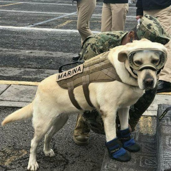 SEMAR Dog Frida Rescues Earthquake Survivors in Mexico