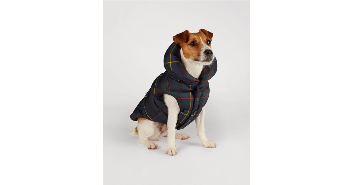 Far More Sophisticated Than Some Silly Dog Sweater This Ralph