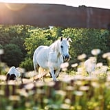 Horse Yoga: Candler, NC