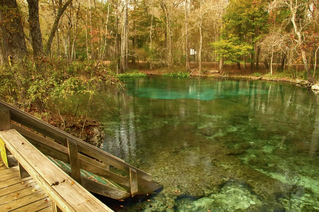 Swim in the warm waters of Ginnie Springs in Florida.