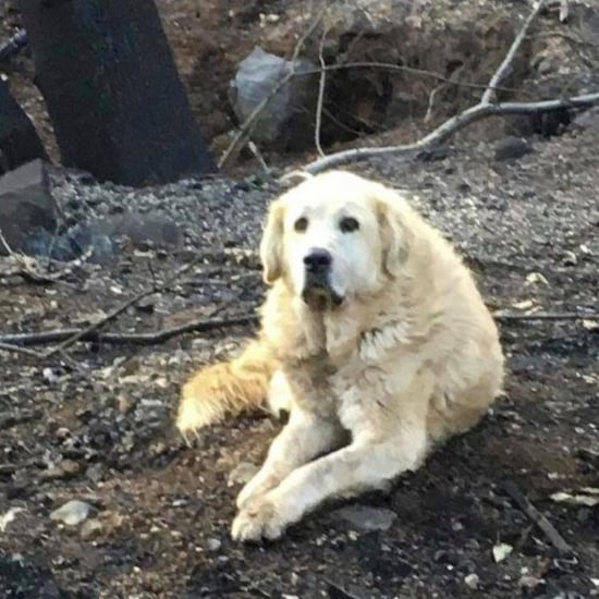 Couple Return to Home After Camp Fire to Find Dog Waiting