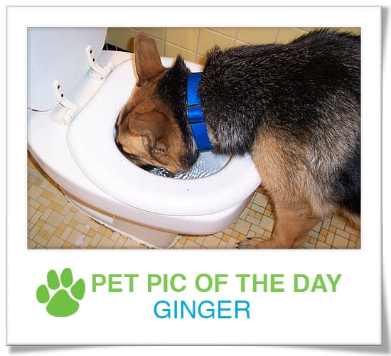 Pet Pic of the Day: Ginger Is So Thirsty