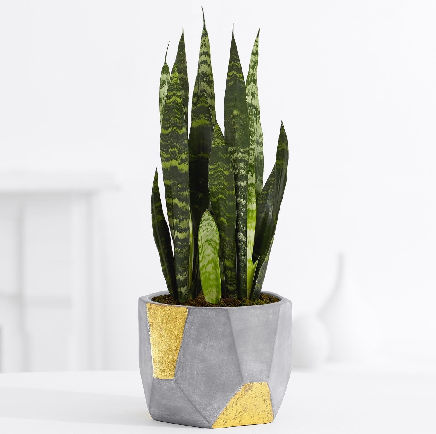 Stylish Mail Order Plants These Are The 17 Products You Need To