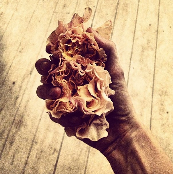Taylor Tomasi Hill could make even wilted petals look high-fashion.  Source: Instagram user ttomasihill