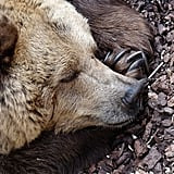 This bear, who is quietly dreaming about eating your picnic.