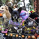 Halloween Costume Contest in Long Beach