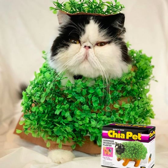 Cat Dressed as a Chia Pet For Halloween
