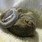 Newborn Squirrel Photo Shoot