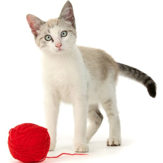 How to Teach a Cat to Fetch