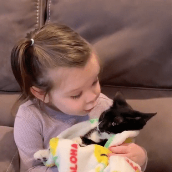 Video of Little Girl Saying Goodbye to Her Cat