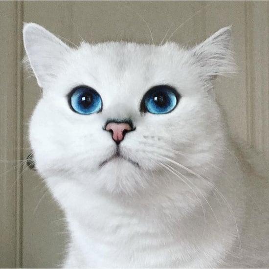 Famous Sphynx Cat Names