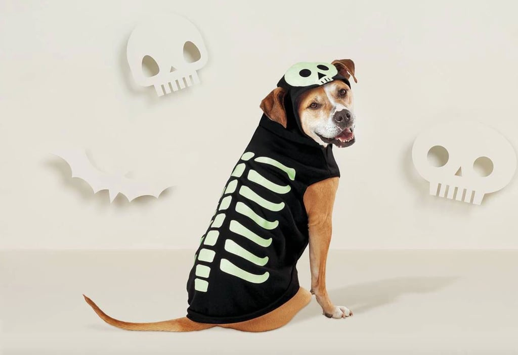 Best Dog Halloween Costumes at Target 2021