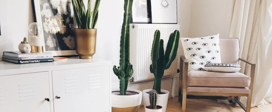 Plants and Greenery in Blogger Homes