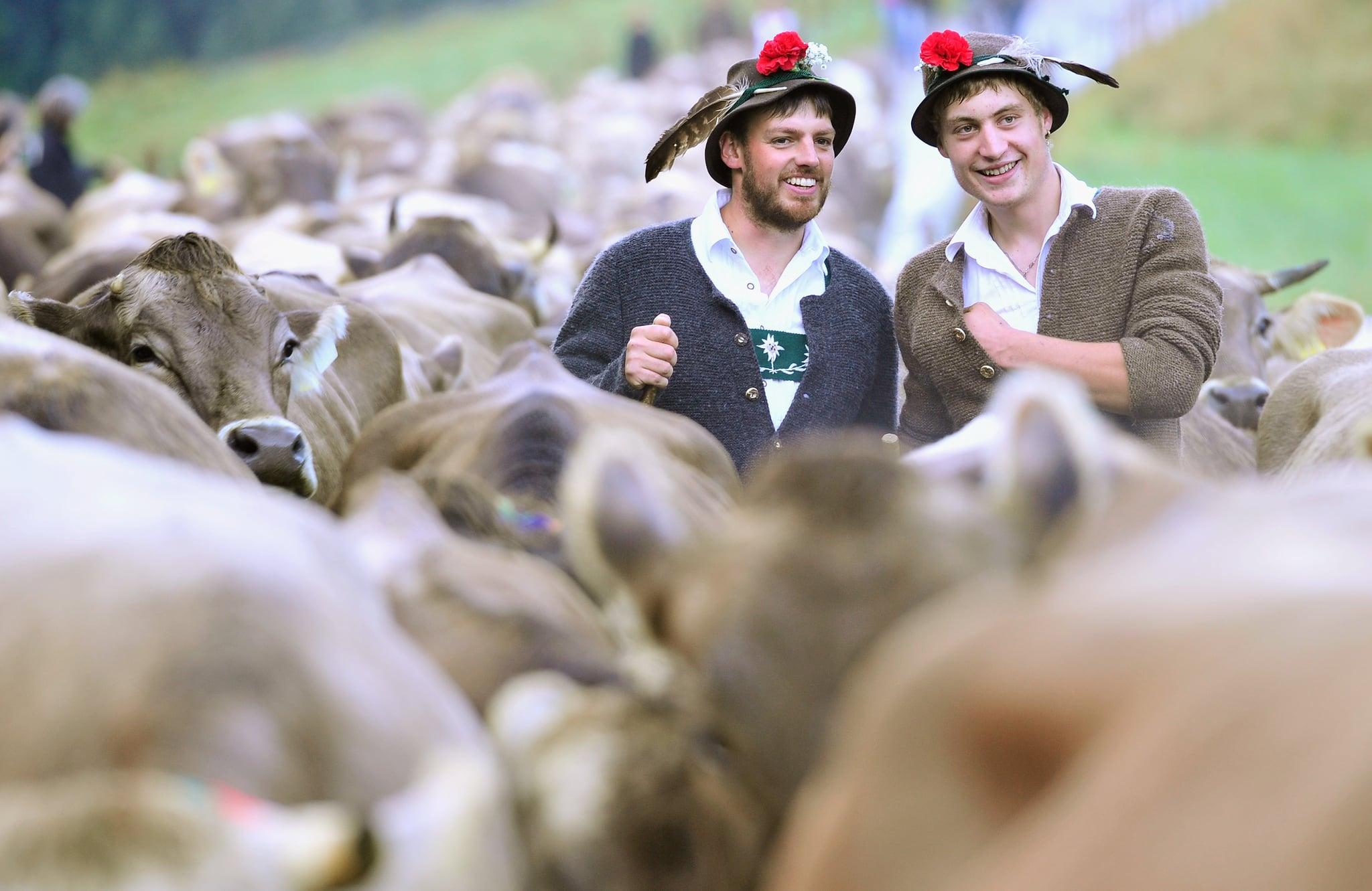 Cattle Crew