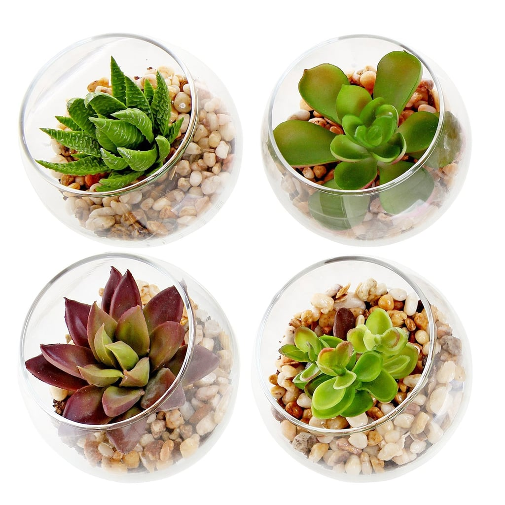 Set of 4 Decorative Mini Modern Design Clear Round Artificial Succulent Plant Glass Display Vases ($25)