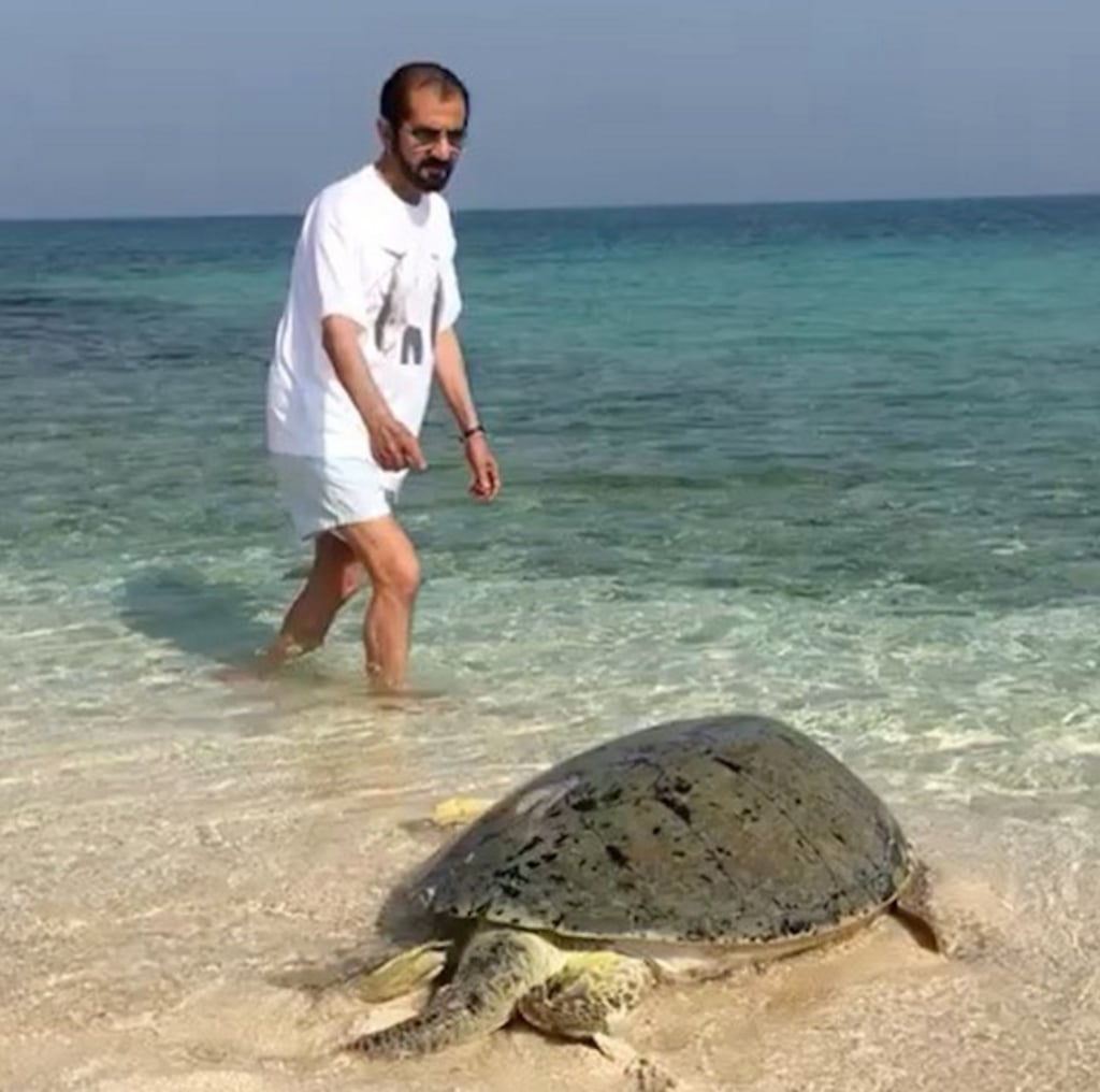 Dubai's Sheikh Mohammed Releases Turtle Into Arabian Gulf