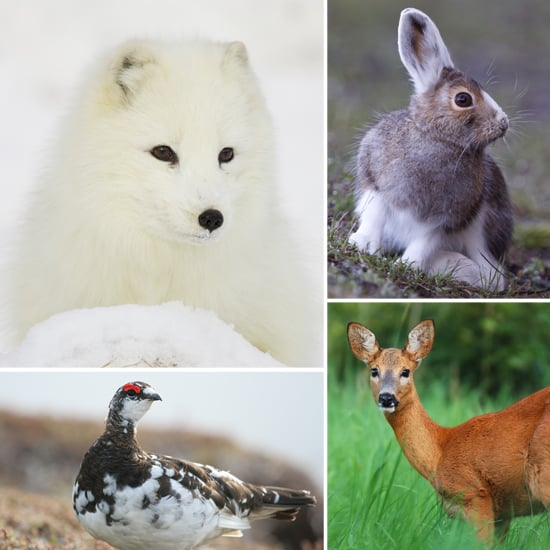 Animals That Change Colors With The Seasons Popsugar Pets