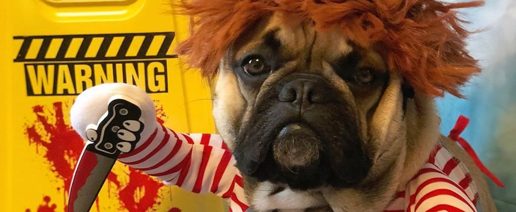 This French Bulldog Wins Halloween With His Chucky Costume
