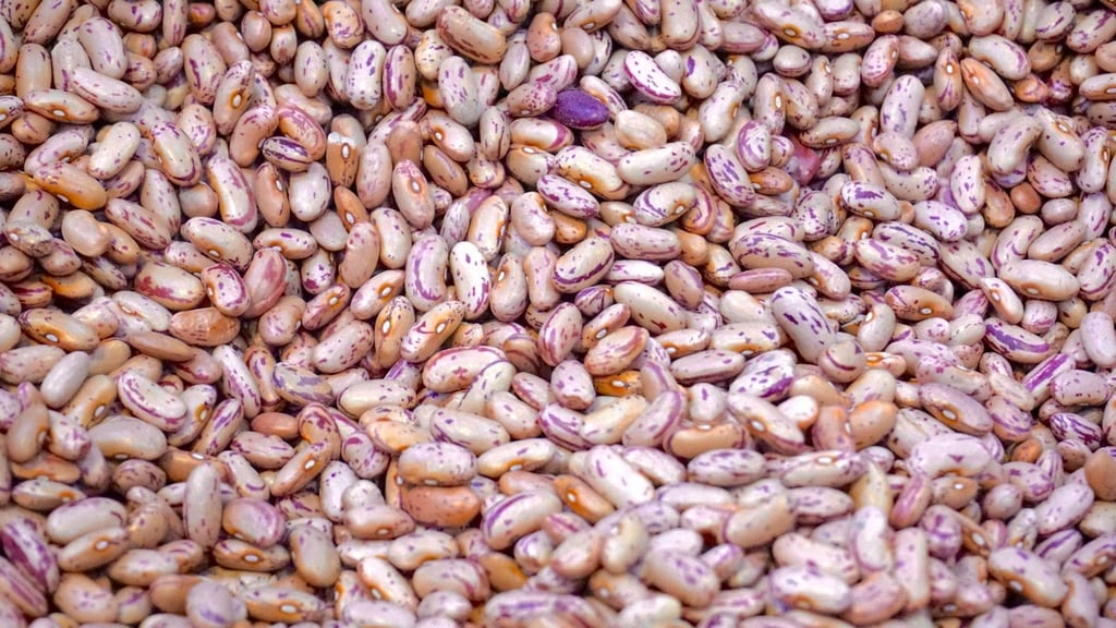 Avoid Beans High in Lectins