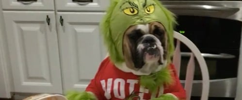 Video of Dog Dressed as the Grinch Eating Ice Cream
