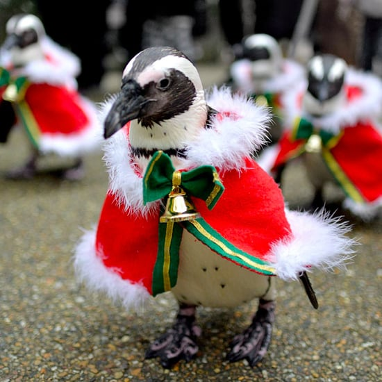 Santa Penguins in Japan