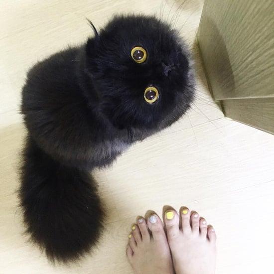 Halloween Black Cat Pictures