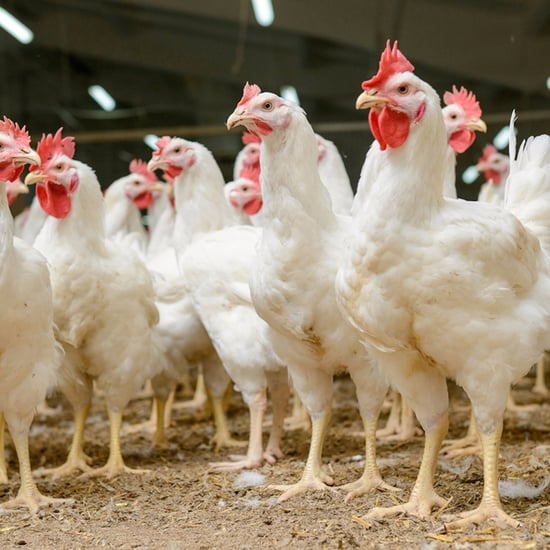 Poultry Imports in the UAE