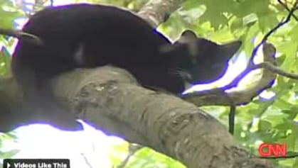 Friday Feel Good: Cat Survives 40-Foot Fall From Tree
