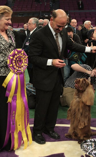 Stump the Sussex Spaniel wins the 133rd Westminster Kennel Club Dog Show in 2009