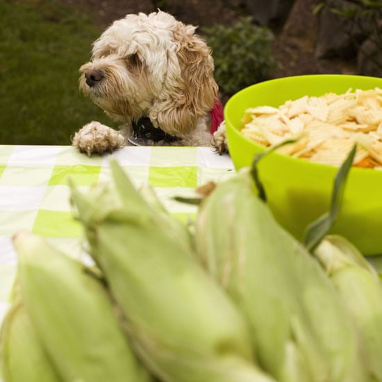 Safe Table Food For Dogs