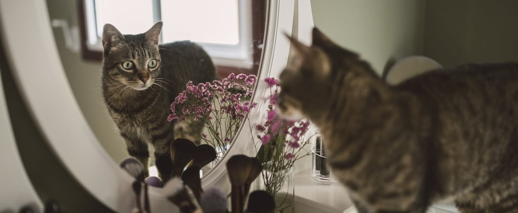 Why Does My Cat Scratch the Mirror?