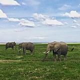 Go on a Safari in Kenya