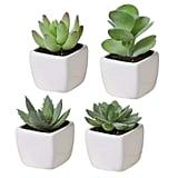 Set of 4 Mini Succulent Plants