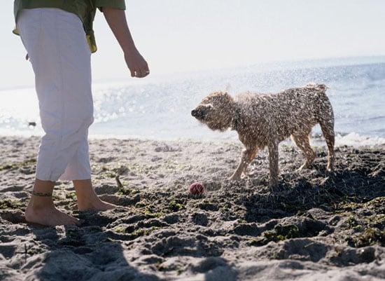 Ask Casa: A Sand-Friendly Vacuum
