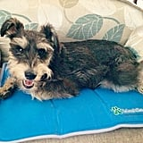 Cool Pet Pad ($25 and up)