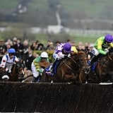 Horses hurdling a jump in the Cheltenham Gold Cup steeplechase race.