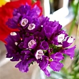 Vibrant and Violet