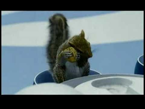 Veruca Salt vs. the Squirrels Part One