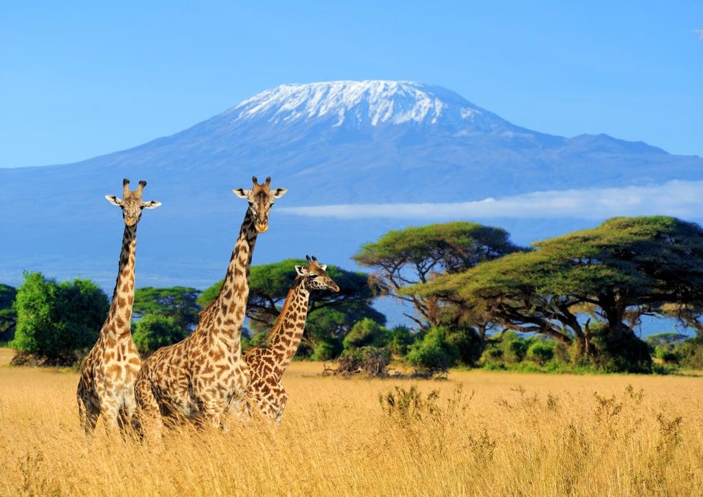 For the Explorer: Kenya