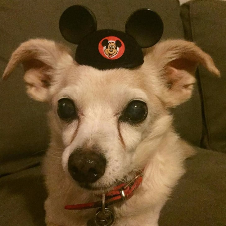 Mickey Mouse Ears For Dogs