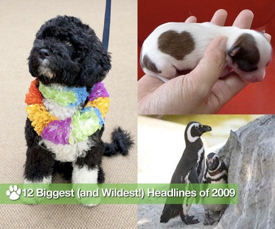 12 Biggest (and Wildest!) Headlines of 2009